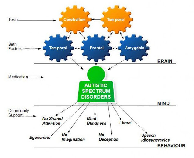 A causal model of Autistic spectrum disorder