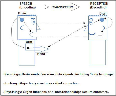 The Communication Chain Diagram of speech and language