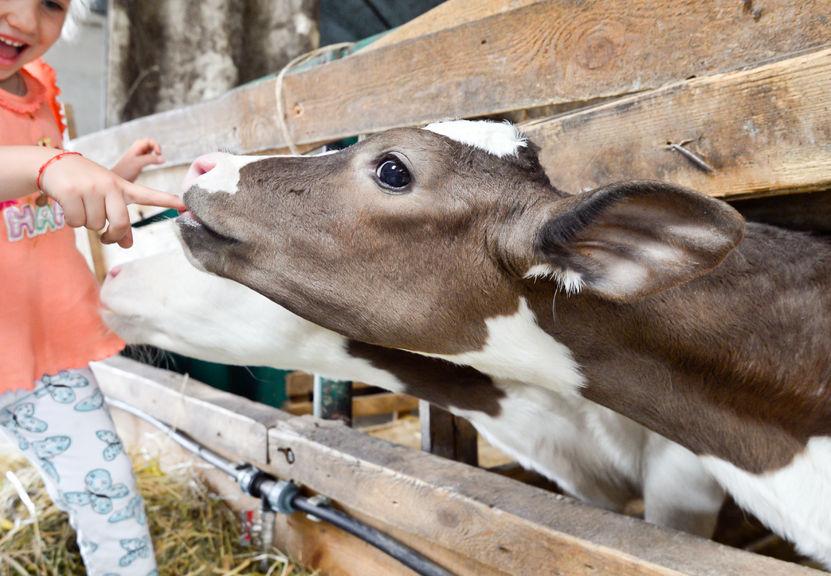 farm healthy choices