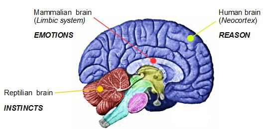 3 part brain