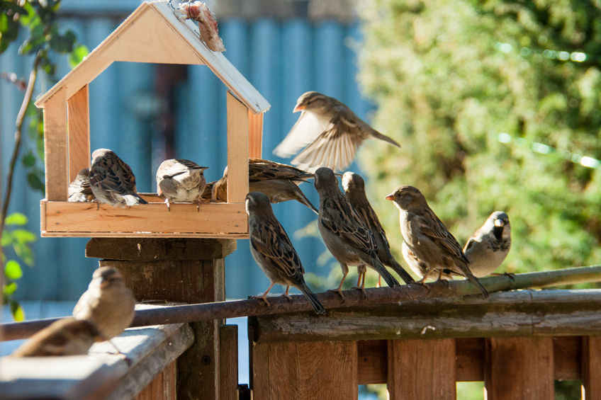 nature activities for kids - making bird tables is a great activity idea
